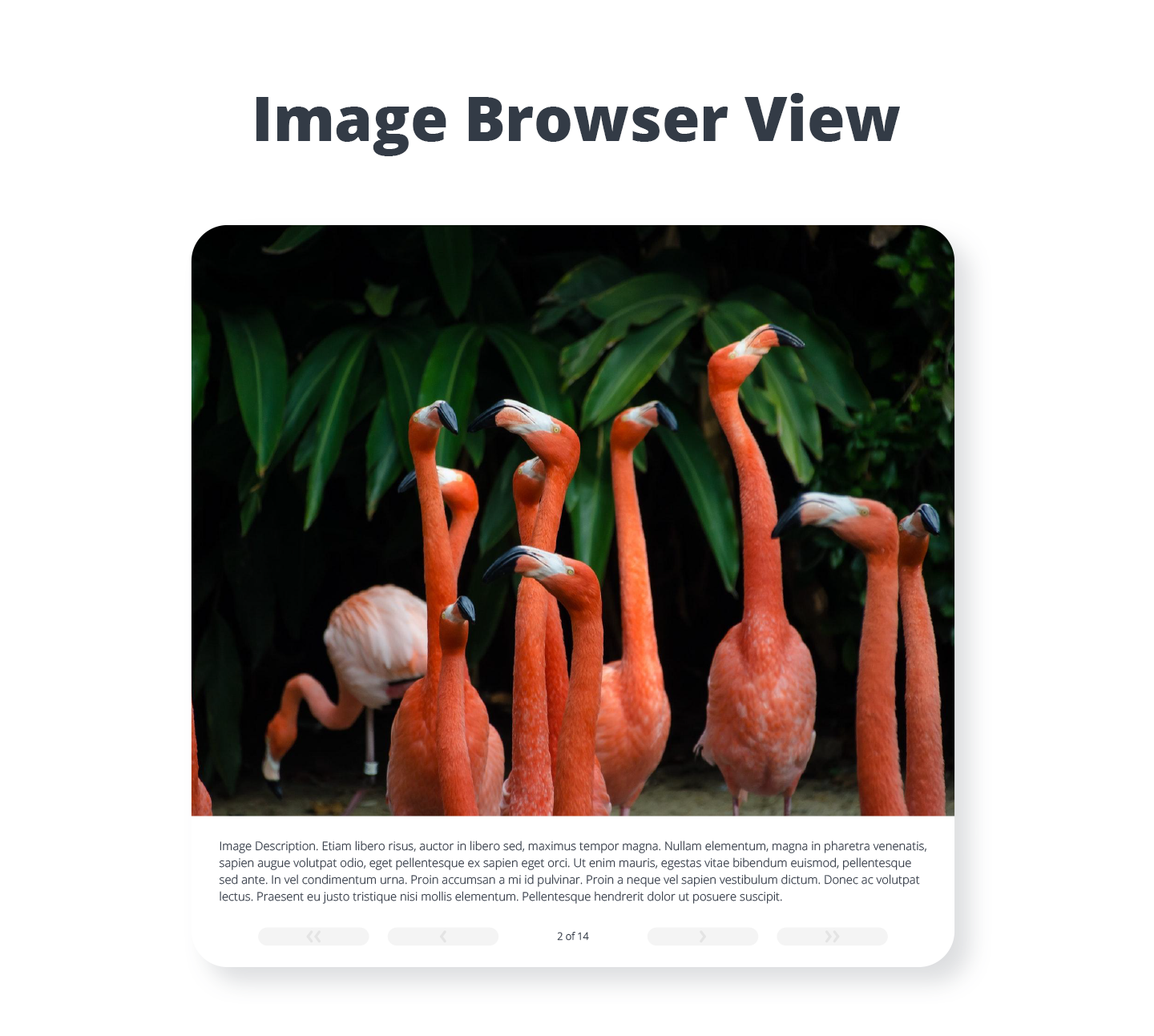 photo gallery image browser view